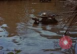 Image of Operation activities Vietnam, 1968, second 12 stock footage video 65675040369