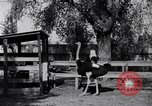 Image of California Ostrich farm Los Angeles California USA, 1916, second 5 stock footage video 65675040389