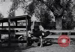 Image of California Ostrich farm Los Angeles California USA, 1916, second 9 stock footage video 65675040389