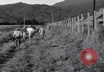Image of Los Banos Internment Camp Laguna Philippines, 1945, second 18 stock footage video 65675040427