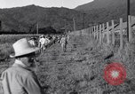 Image of Los Banos Internment Camp Laguna Philippines, 1945, second 19 stock footage video 65675040427