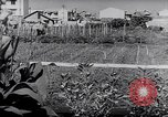 Image of Vegetable Garden Japan, 1945, second 9 stock footage video 65675040431