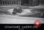 Image of Hippopotamus San Diego California USA, 1940, second 4 stock footage video 65675041000