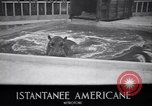 Image of Hippopotamus San Diego California USA, 1940, second 5 stock footage video 65675041000
