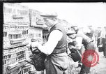 Image of Pigeons Selby England, 1933, second 11 stock footage video 65675041255