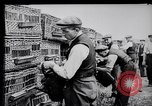 Image of Pigeons Selby England, 1933, second 12 stock footage video 65675041255