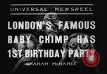 Image of Baby chimpanzee London England United Kingdom, 1936, second 5 stock footage video 65675041290