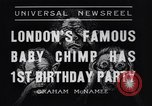 Image of Baby chimpanzee London England United Kingdom, 1936, second 7 stock footage video 65675041290