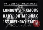 Image of Baby chimpanzee London England United Kingdom, 1936, second 9 stock footage video 65675041290