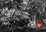 Image of Buna campaign New Guinea, 1943, second 8 stock footage video 65675041520