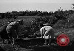 Image of Invasion of Aguni Jima Okinawa Ryukyu Islands, 1945, second 11 stock footage video 65675042091