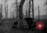 Image of Germans cutting trees for fuel in Berlin after World War 2 Berlin Germany, 1945, second 10 stock footage video 65675042630