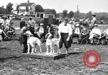 Image of Kennel Club dog show Westport Connecticut USA, 1930, second 10 stock footage video 65675042736