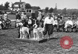 Image of Kennel Club dog show Westport Connecticut USA, 1930, second 12 stock footage video 65675042736