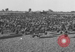 Image of turkeys Pomona California USA, 1934, second 4 stock footage video 65675042750