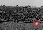 Image of turkeys Pomona California USA, 1934, second 6 stock footage video 65675042750
