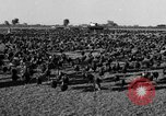 Image of turkeys Pomona California USA, 1934, second 7 stock footage video 65675042750