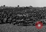 Image of turkeys Pomona California USA, 1934, second 8 stock footage video 65675042750