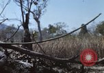 Image of 1st Australian task force South Vietnam, 1968, second 11 stock footage video 65675042955
