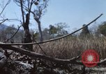 Image of 1st Australian task force South Vietnam, 1968, second 12 stock footage video 65675042955