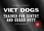 Image of German Shepard dog Vietnam, 1967, second 1 stock footage video 65675043045