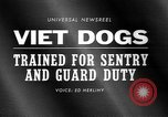 Image of German Shepard dog Vietnam, 1967, second 2 stock footage video 65675043045
