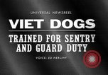 Image of German Shepard dog Vietnam, 1967, second 5 stock footage video 65675043045