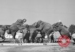 Image of Ringling Brothers Circus Sarasota Florida USA, 1938, second 9 stock footage video 65675043527