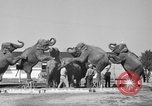 Image of Ringling Brothers Circus Sarasota Florida USA, 1938, second 11 stock footage video 65675043527