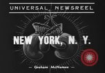 Image of Golden Glove finalists New York United States USA, 1938, second 8 stock footage video 65675043529