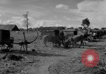Image of Bullock cart dwellers Phnom Penh Cambodia, 1957, second 11 stock footage video 65675043579