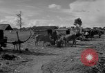 Image of Bullock cart dwellers Phnom Penh Cambodia, 1957, second 12 stock footage video 65675043579