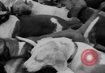 Image of Annual Saint Hubert's hunt Compiegne France, 1938, second 9 stock footage video 65675043744