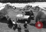 Image of dwarf trainers San Diego California USA, 1936, second 10 stock footage video 65675043765