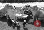 Image of dwarf trainers San Diego California USA, 1936, second 11 stock footage video 65675043765
