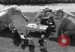 Image of dwarf trainers San Diego California USA, 1936, second 12 stock footage video 65675043765
