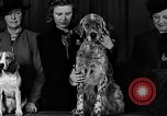 Image of dog show New York United States USA, 1940, second 7 stock footage video 65675044063
