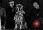 Image of dog show New York United States USA, 1940, second 8 stock footage video 65675044063