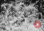 Image of Ho Chi Minh rides pony on jungle trail Vietnam, 1942, second 2 stock footage video 65675044087