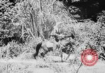 Image of Ho Chi Minh rides pony on jungle trail Vietnam, 1942, second 4 stock footage video 65675044087