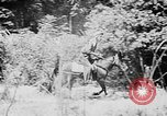 Image of Ho Chi Minh rides pony on jungle trail Vietnam, 1942, second 5 stock footage video 65675044087