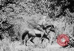Image of Ho Chi Minh rides pony on jungle trail Vietnam, 1942, second 6 stock footage video 65675044087