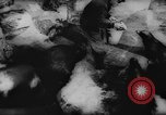 Image of German Zoo Germany, 1962, second 8 stock footage video 65675044377