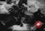 Image of German Zoo Germany, 1962, second 9 stock footage video 65675044377