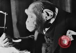 Image of Chimpanzee Oscar dining at table Lucerne Switzerland, 1930, second 12 stock footage video 65675044386