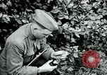 Image of 318th Infantry Regiment France, 1918, second 3 stock footage video 65675044423