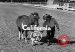 Image of Ronnie Graham California United States USA, 1954, second 2 stock footage video 65675044581