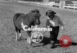 Image of Ronnie Graham California United States USA, 1954, second 3 stock footage video 65675044581