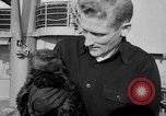 Image of sea otters Seattle Washington USA, 1954, second 12 stock footage video 65675044586