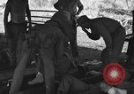 Image of Nadzab casualties Marilanin New Guinea, 1943, second 5 stock footage video 65675044792